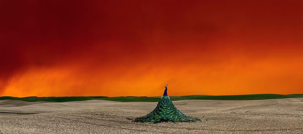 Art-of-Farmland-Palouse-No6_mini