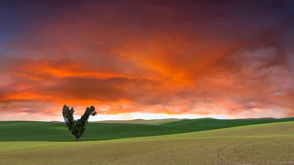 Art-of-Farmland-Palouse-No8-16X9-Pano_mini