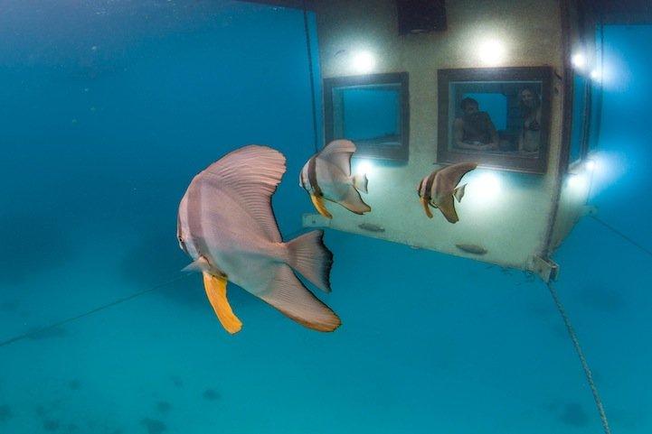 mantaunderwaterroom4