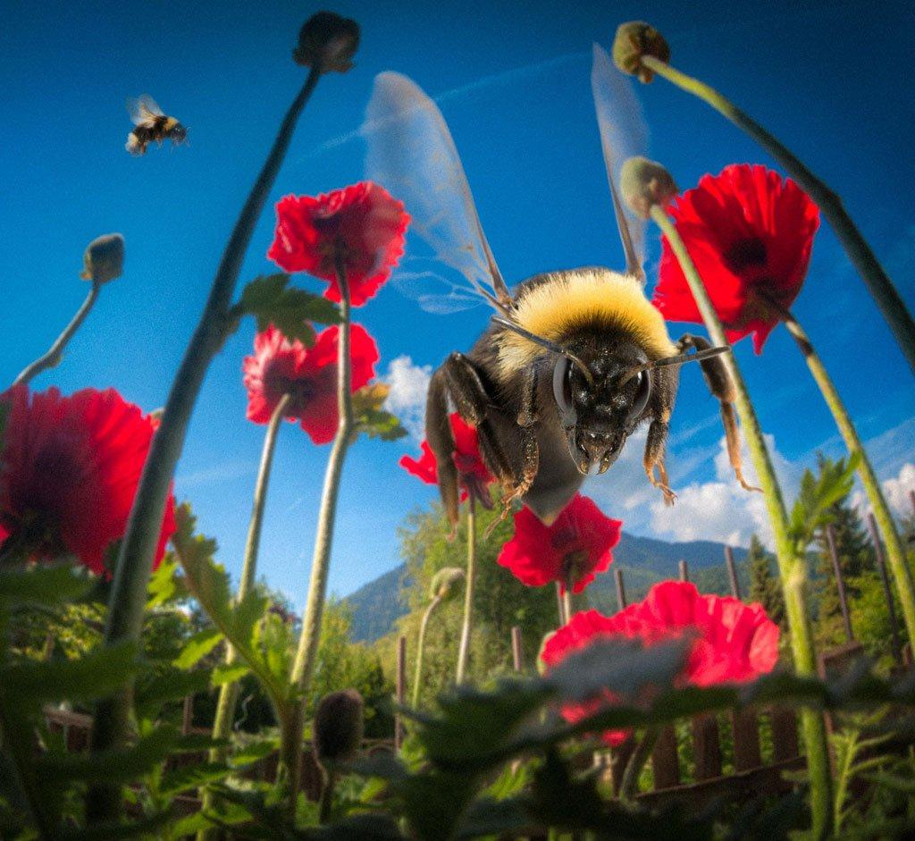 poppy & bumblebee by Stefan Thaler