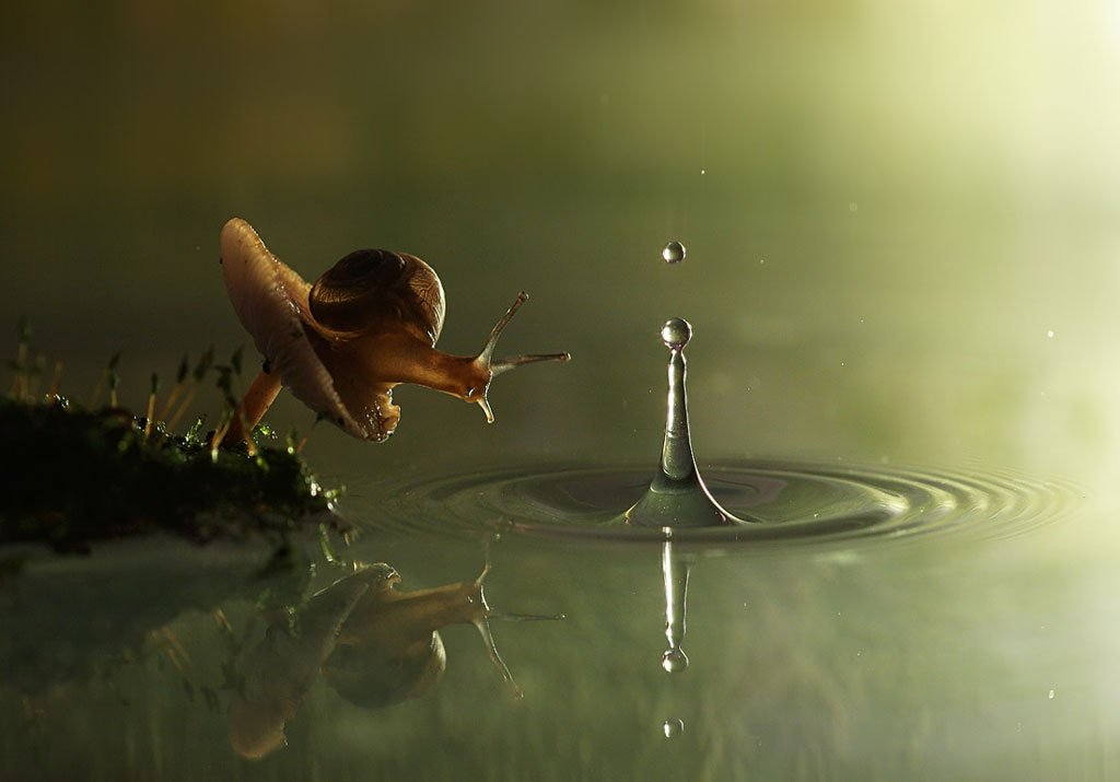 Snail and the raindrop by Vadim Trunov