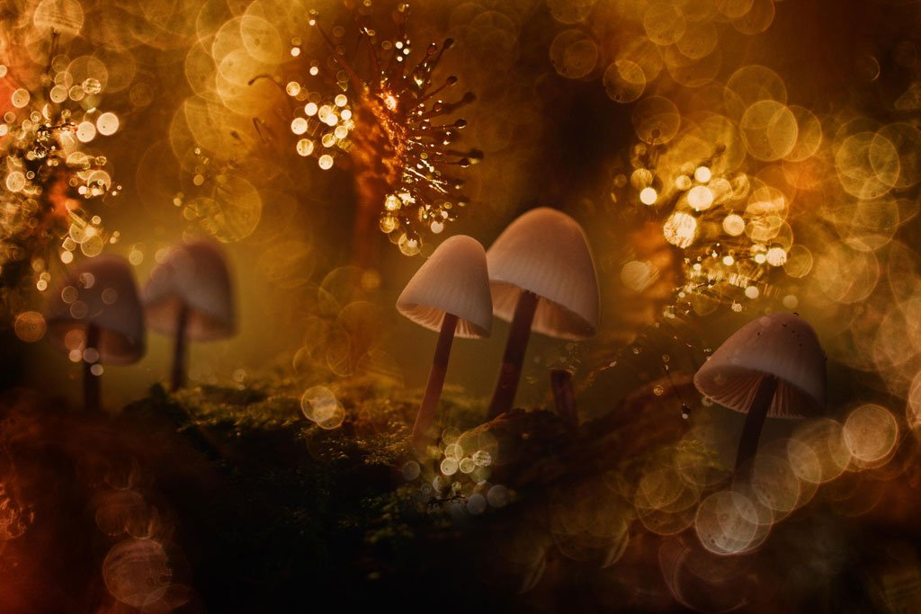Autumn-fairy by Wil Mijer