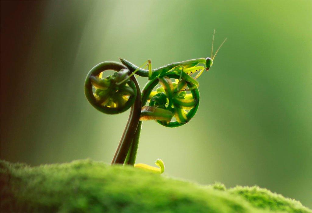 Rate my bike by tustel ico