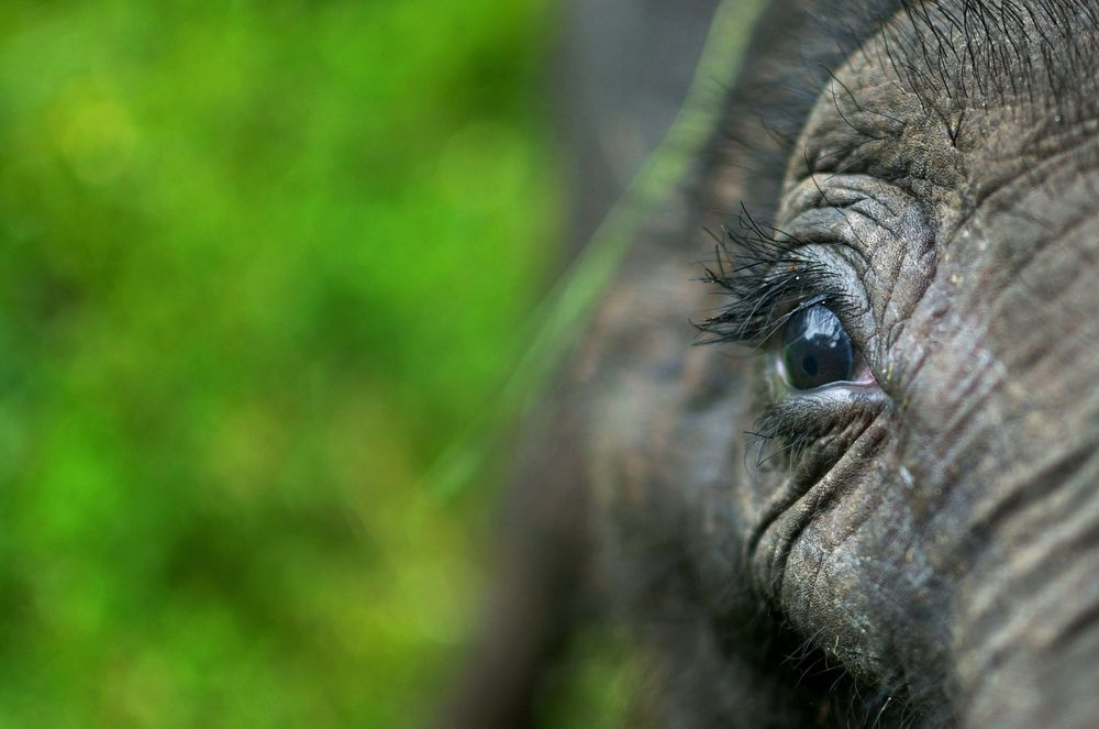 A Young Elephant's Love Photograph by Abhiroop Ghosh Dastidar, National Geographic