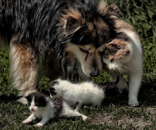 -cats-and-dogs-getting-along