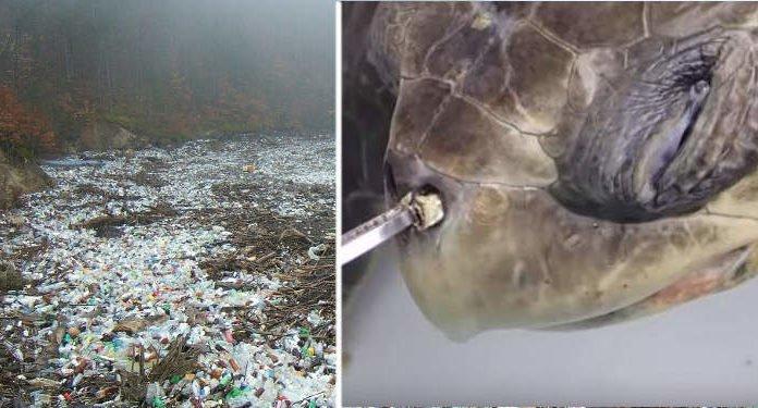 Plastic Pollution Accidental Super Enzyme Eats Dangerous Plastic 00